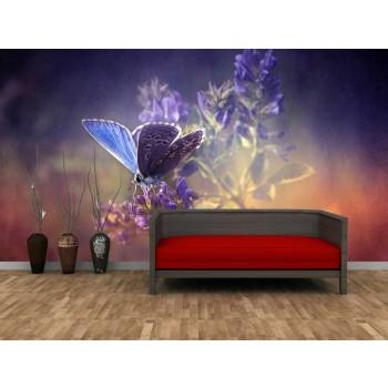 Tapeta - Fialový motýl