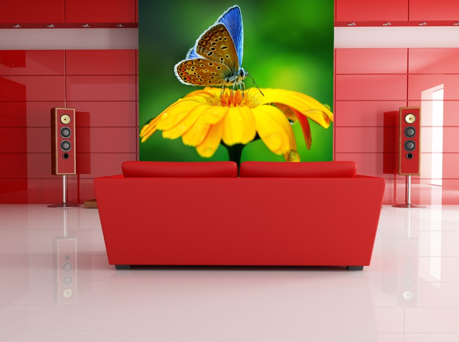 Tapeta - Motýl na květu 2 - 120x80 cm - PopyDesign