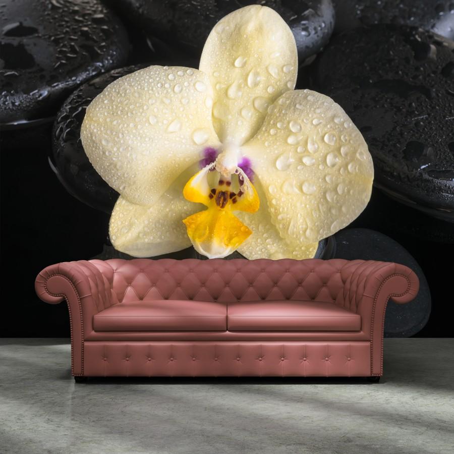 Tapeta - Žlutá orchidej - 120x120 cm - PopyDesign