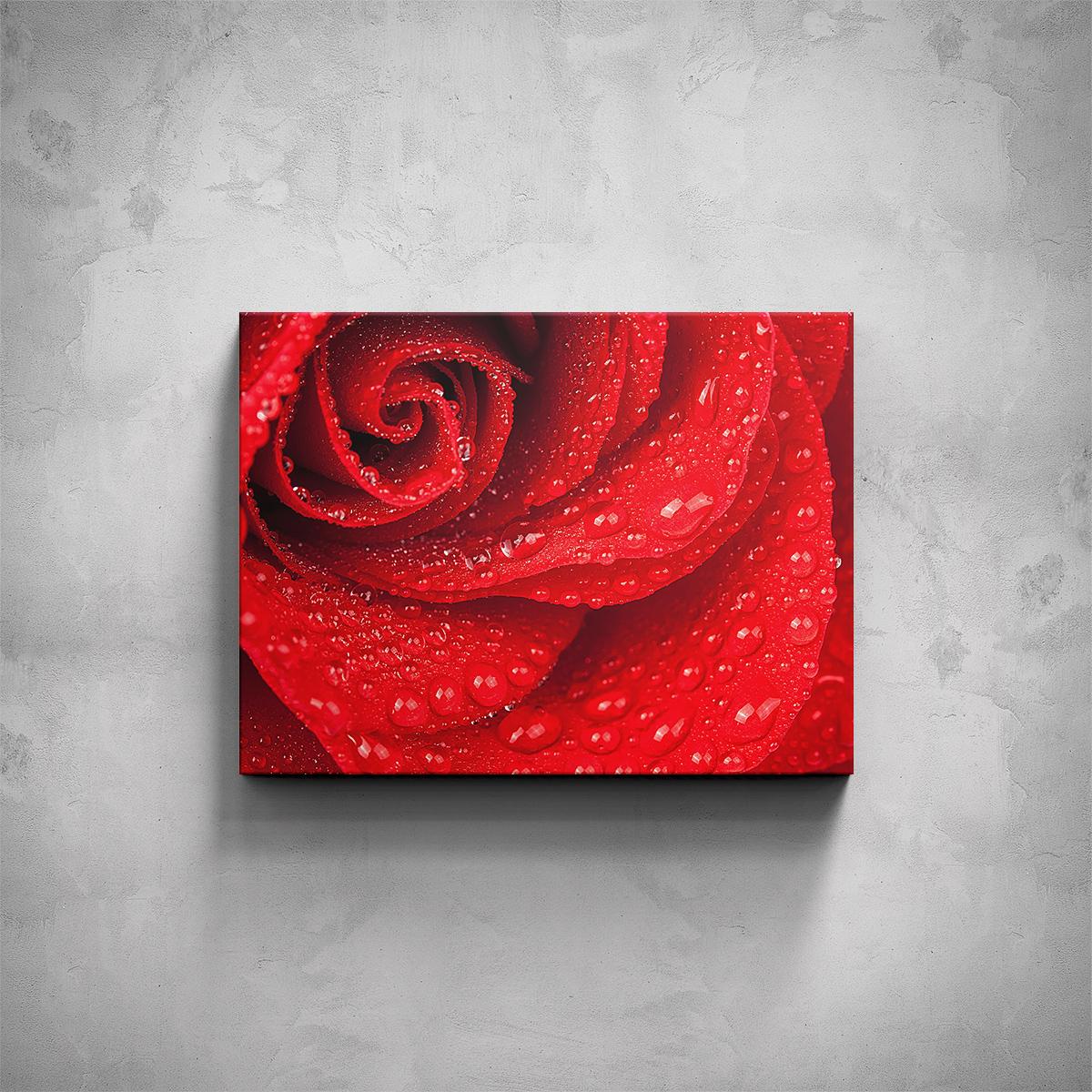 Obraz - Růže detail - PopyDesign