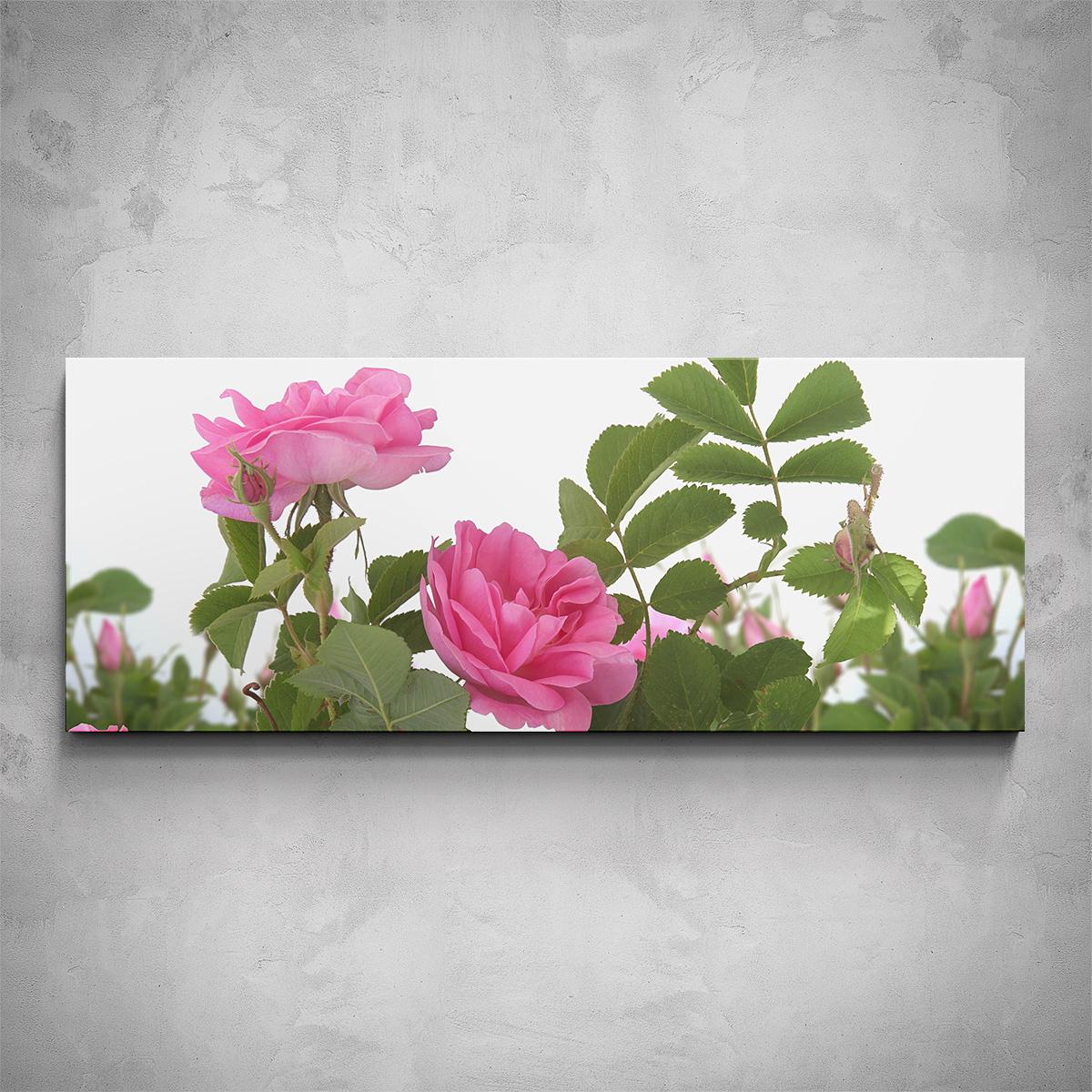 Obraz - Růžová růže - PopyDesign