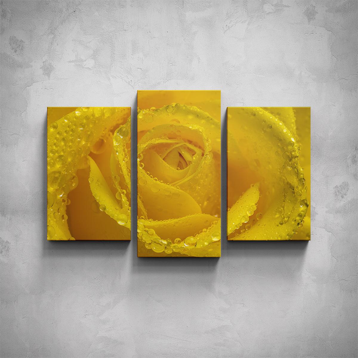 3-dílný obraz - Žlutá růže - PopyDesign